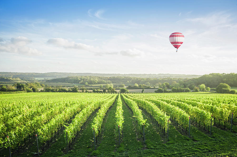 Hot Air Balloon Floating Over Vineyard Photograph by Jacobs Stock Photography Ltd