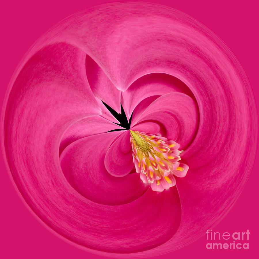 Anne Photograph - Hot Pink And Round by Anne Gilbert