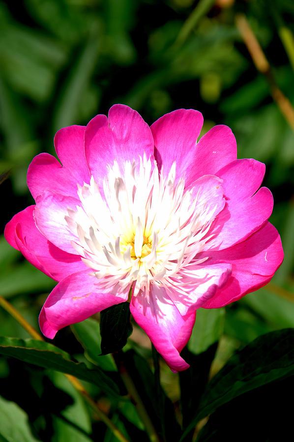 Botanical Garden Photograph - Hot Pink by Caroline Stella