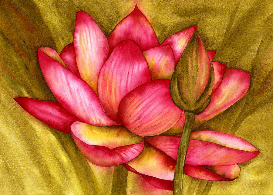 Pink Waterlily Painting - Hot Pink by Diane Ferron