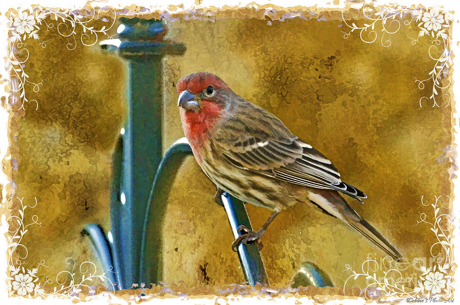 House finch digital paint photograph by debbie portwood for Digitally paint your house