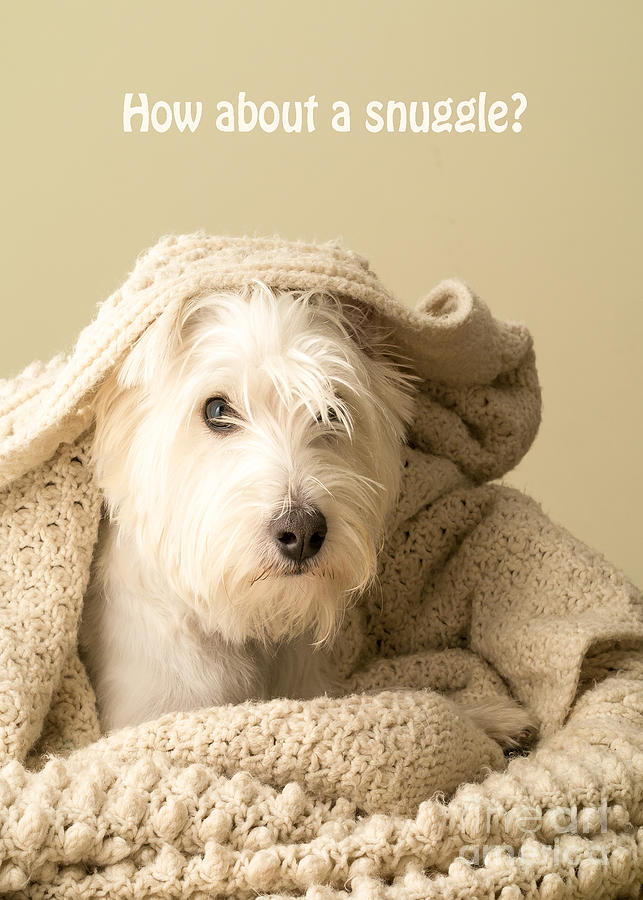 Cute Photograph - How About A Snuggle Card by Edward Fielding