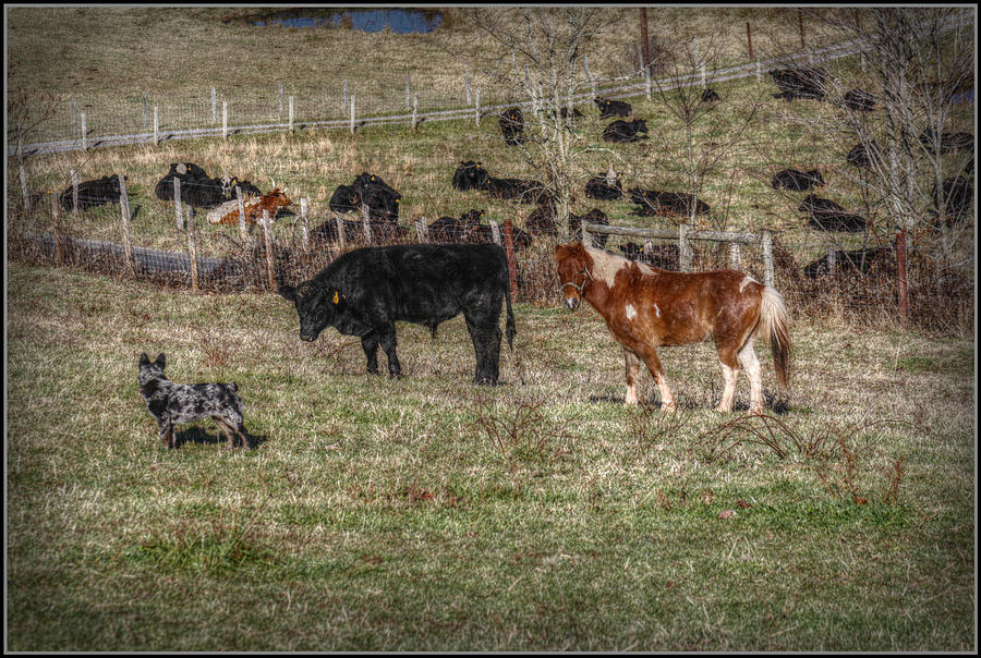 How Bout I Herd You Photograph by Missy Richards