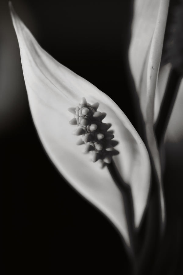 Flowers Photograph - How Can We Let It Slip Away? by Laurie Search