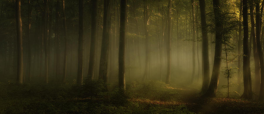 Landscape Photograph - How Can Words Express The Feel Of Sunlight In The Morning by Norbert Maier