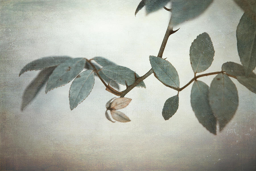 Leaves Photograph - How Delicate This Balance by Laurie Search
