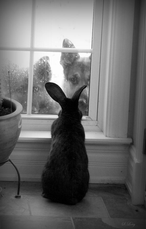 Rabbit Photograph - How Much Is The Doggie In The Window? by Sue Long