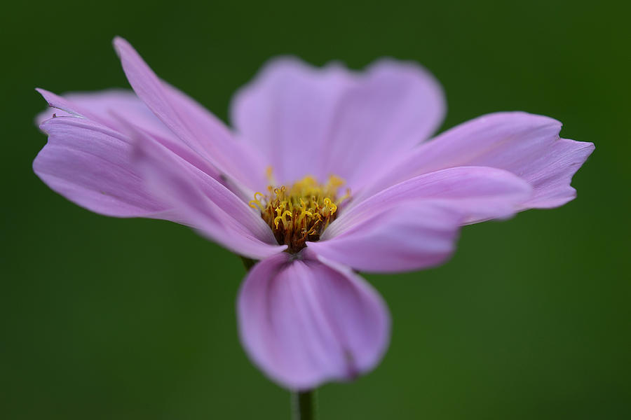Flower Photograph - How Still They Are... by Melanie Moraga