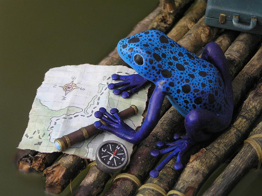 Frog Mixed Media - Huckleberry Frog II by Jennifer Montgomery