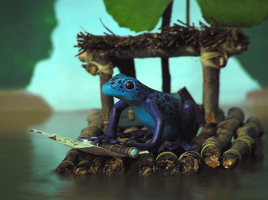 Blue Photograph - Huckleberry Frog by Jennifer Montgomery