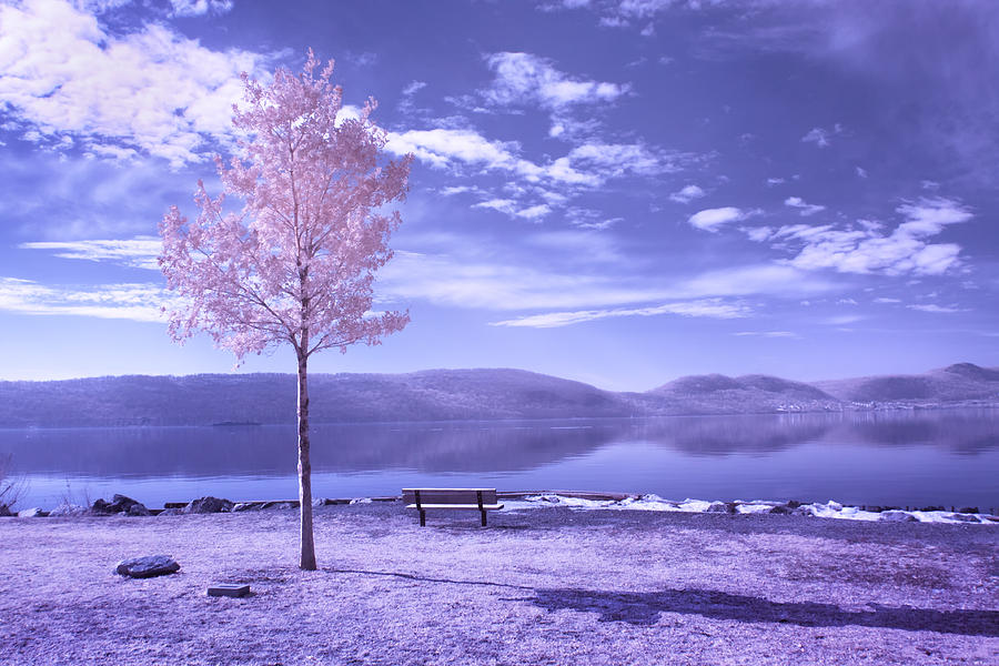 Bench Photograph - Hudson River Tree And Bench by Dave Beckerman