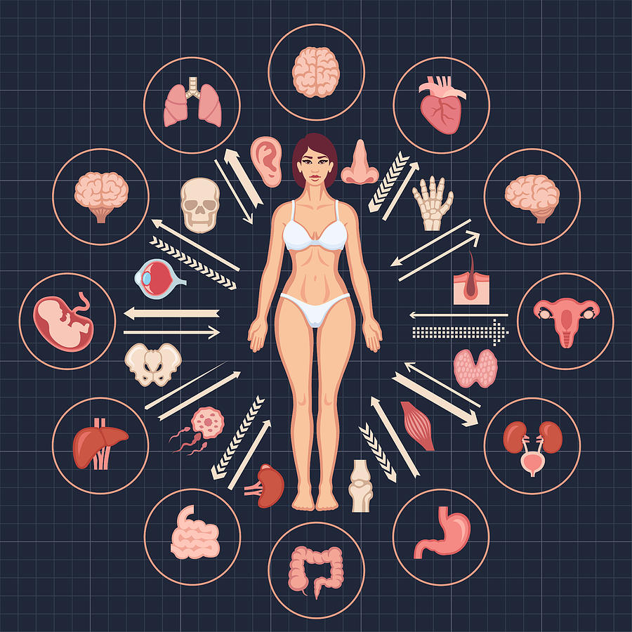 Human body and internal organs Drawing by AlonzoDesign