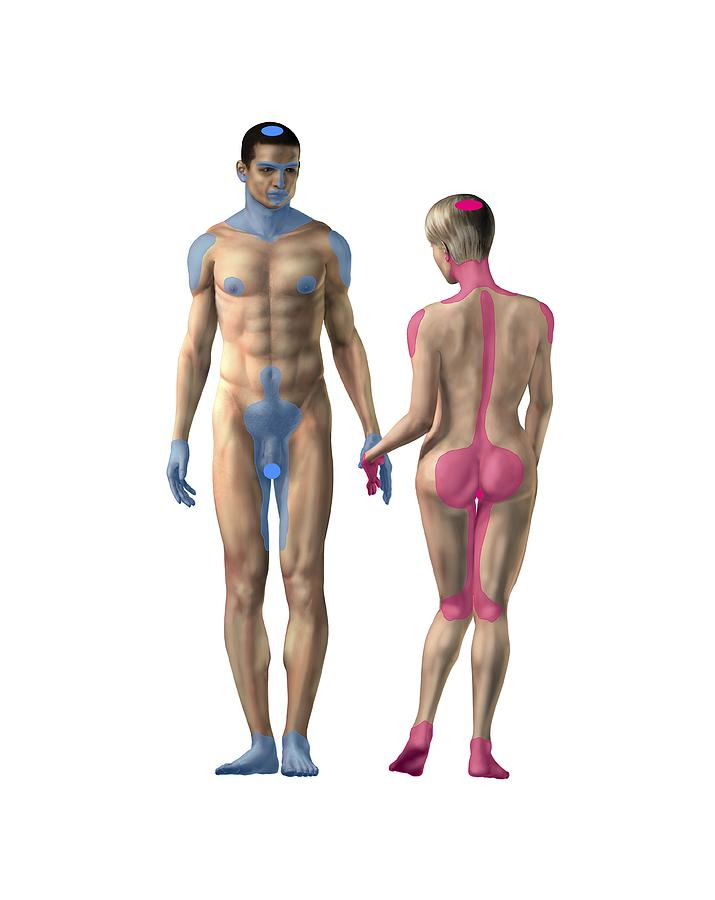 Mens erogenous zones