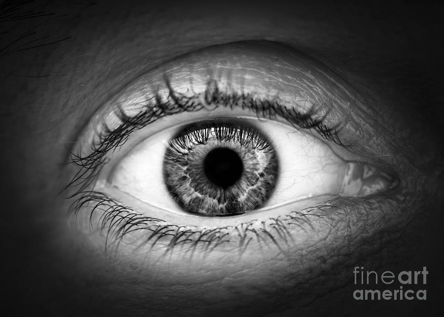 Eye Photograph - Human Eye by Elena Elisseeva