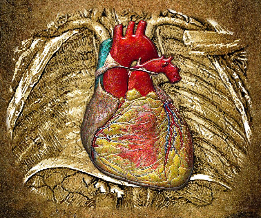Human Heart Photograph by Granger   Human Heart Art