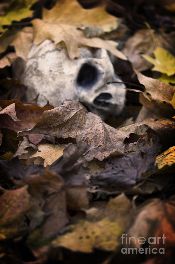 Skull Photograph - Human Skull Beneath Autumn Leaves by Lee Avison