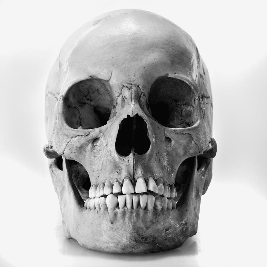 Human skull by joe clark