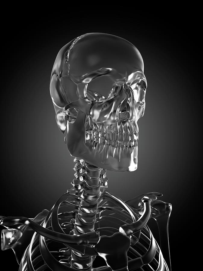 Artwork Photograph - Human Skull Rendered In Glass by Sebastian Kaulitzki/science Photo Library