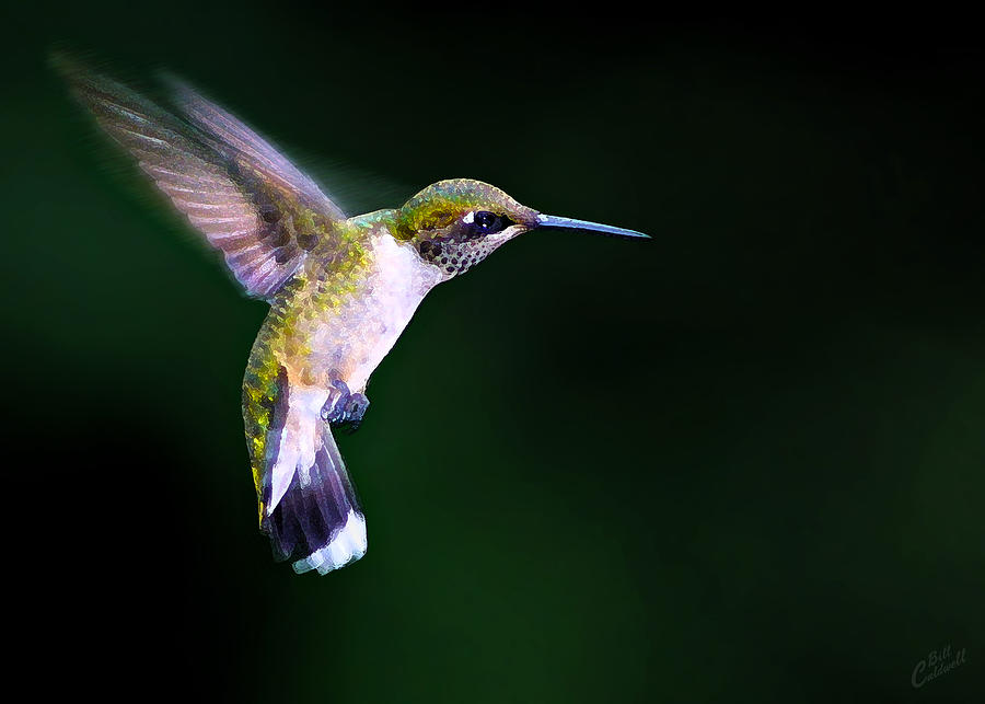 Nature Photograph - Hummer Ballet 2 by ABeautifulSky Photography