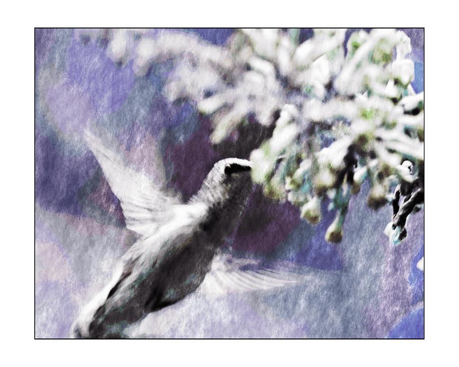 Hummingbird Photograph - Hummer Feeding by Susan Leggett