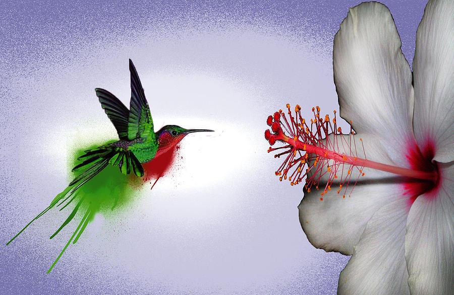 Hummingbird In Flight Digital Art - Hummer Splash In Flight by Diana Shively