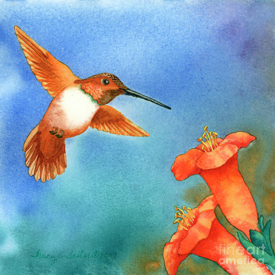 Bird Painting - Hummer by Tracy L Teeter