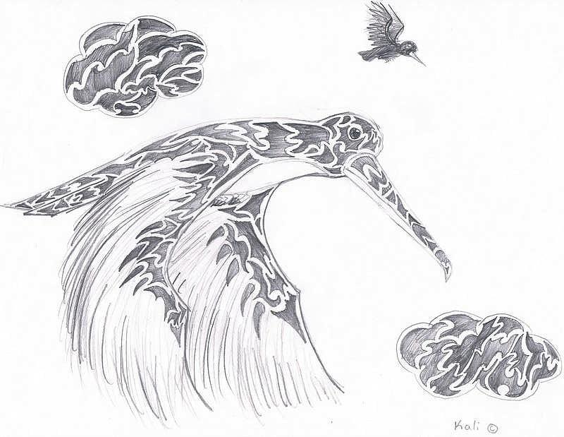 Pencil Drawing - Humming Bird  by Kali Kardsbykali