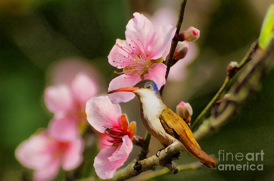 Hummingbird Photograph - Humming Bird Taking A Nap by John  Kolenberg