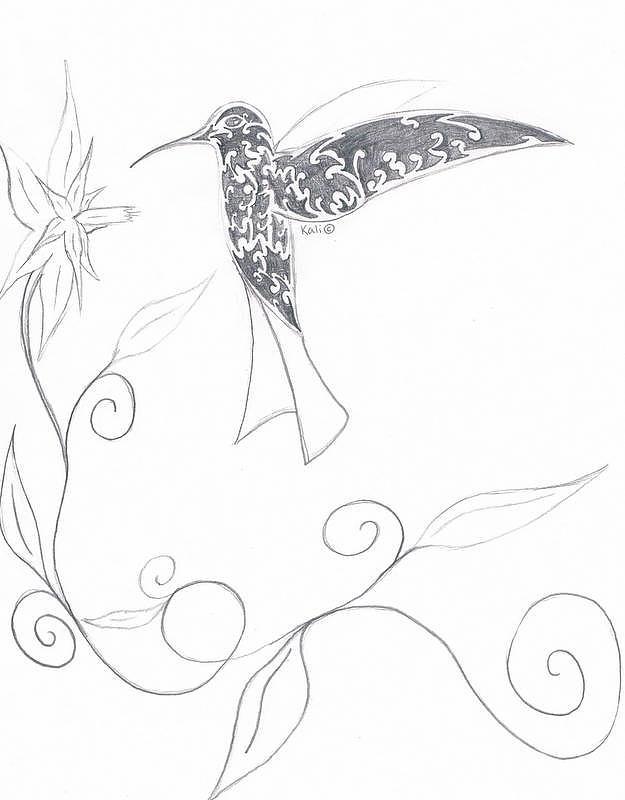 Pencil Drawing - Humming Bird2 by Kali Kardsbykali