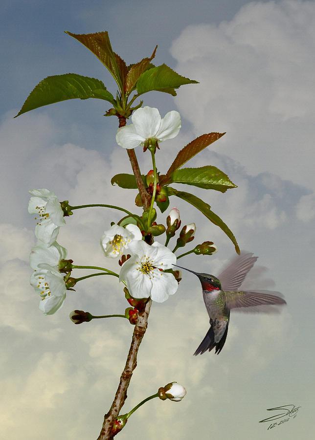 Hummingbird Digital Art - Hummingbird And Apple Blossom by M Spadecaller