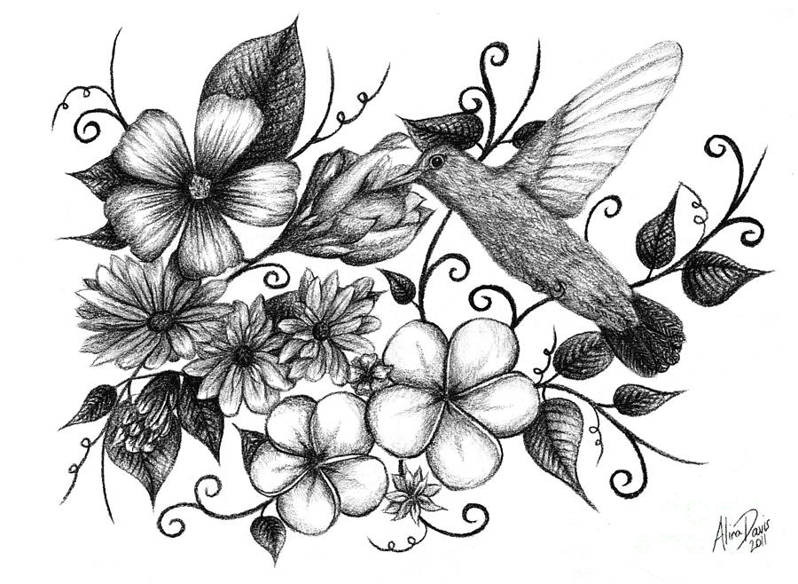 Hummingbird And Floral Sketch Drawing By Alina Davis