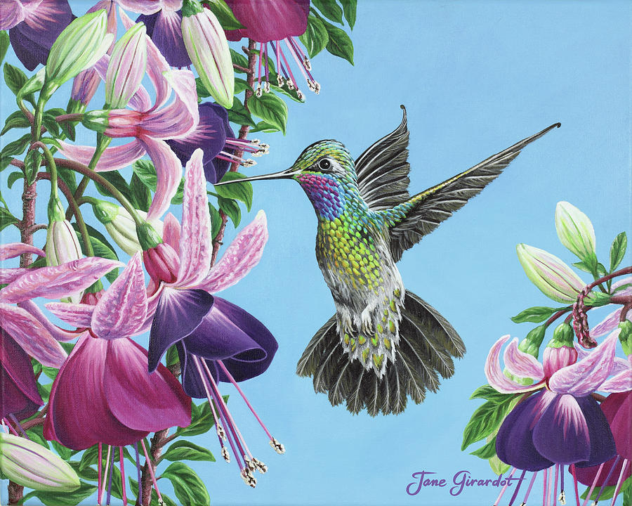 Hummingbird and Fuchsias Painting by Jane Girardot