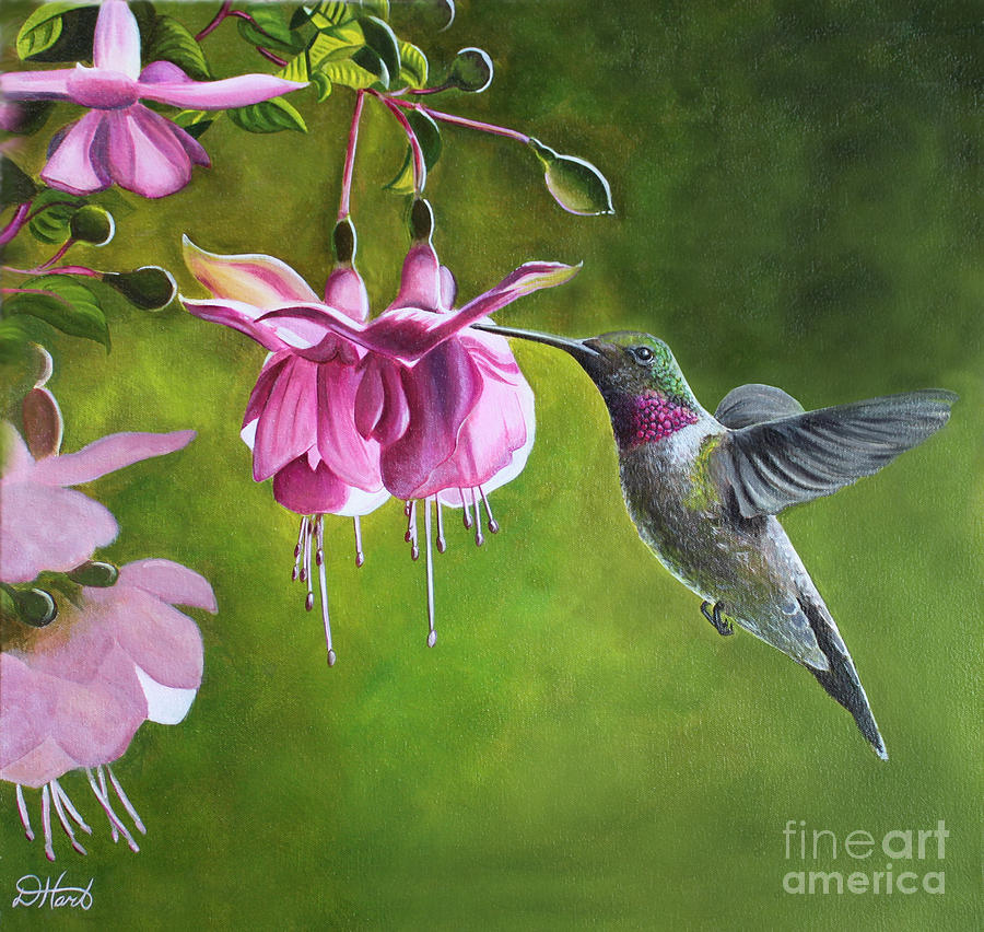 Hummingbird and Fuschia Painting by Debbie Hart