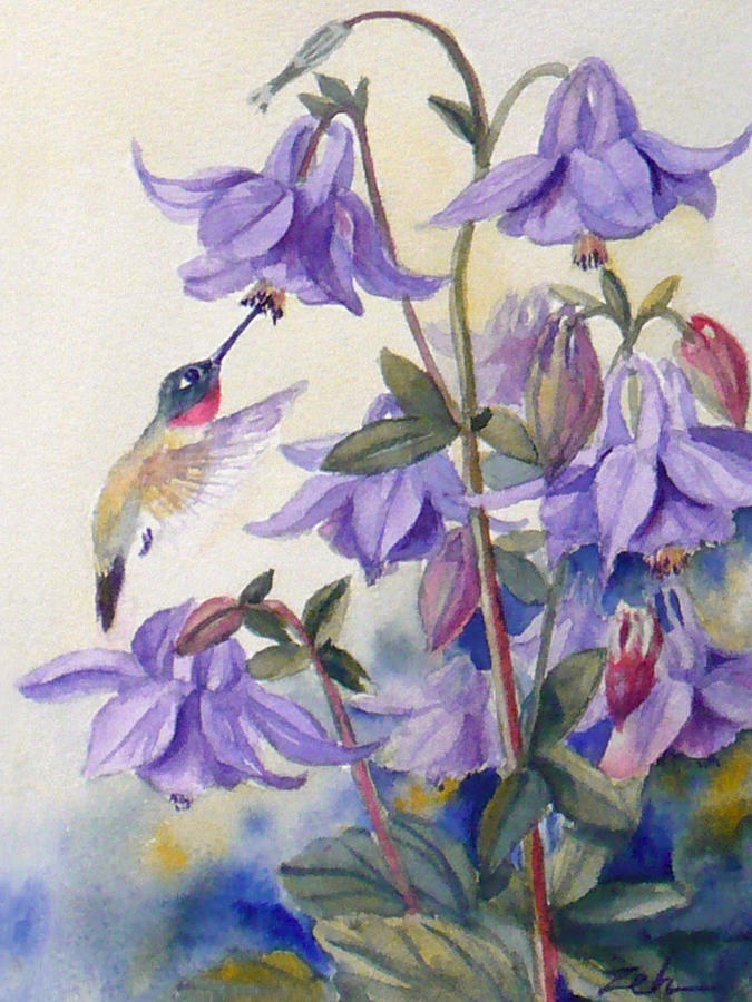 Hummingbird and Purple Columbine Painting by Janet Zeh