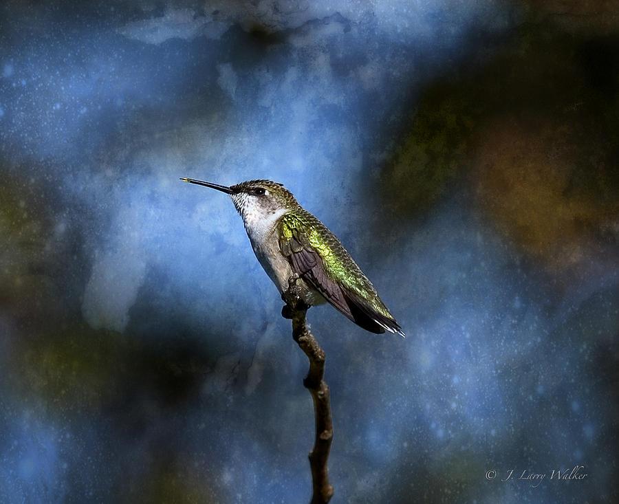 Hummingbird Beauty by J Larry Walker