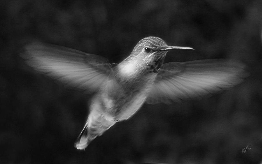 Humming Bird Photograph - Hummingbird by Ben and Raisa Gertsberg