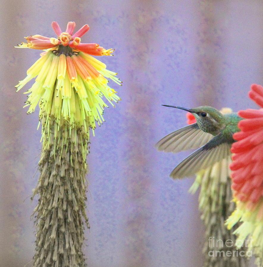 Hummingbird Photograph - Hummingbird Bliss by Michele Hancock