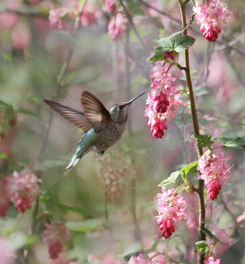 Animals Photograph - Hummingbird Heaven by Angie Vogel