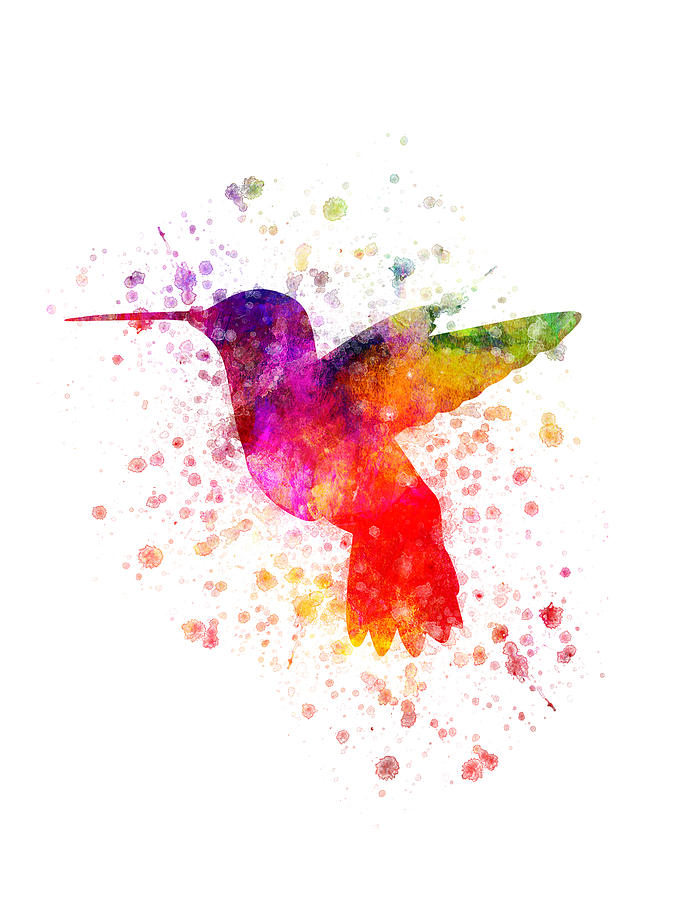 Hummingbird In Color Digital Art