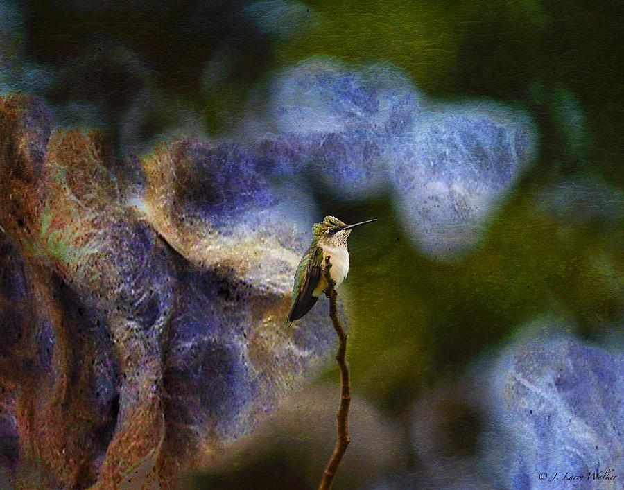 Walker Digital Art - Hummingbird In The Cosmos by J Larry Walker