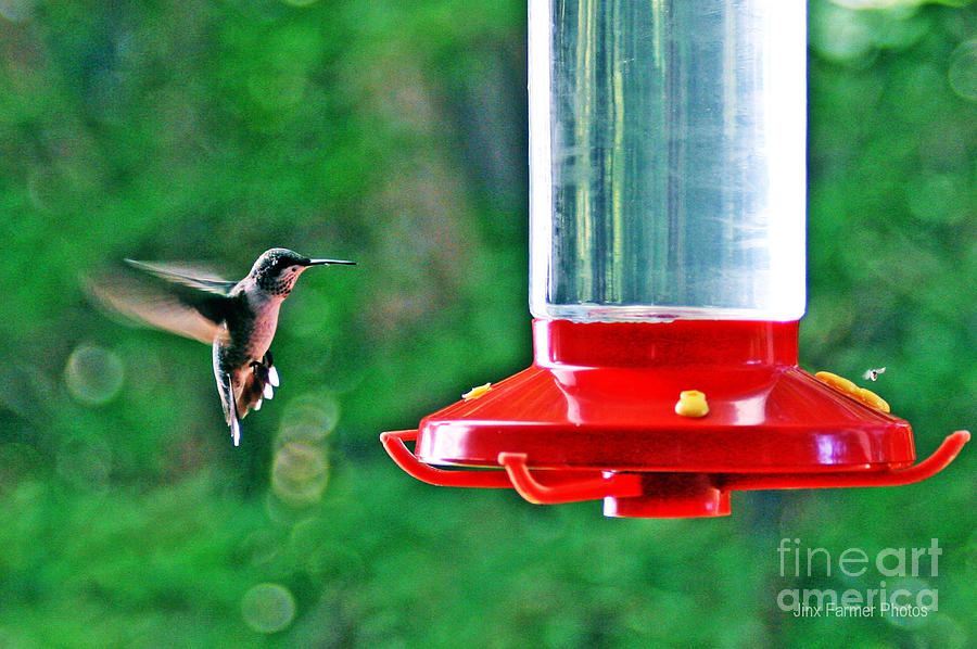 Hummingbird Photograph - Hummingbird Love by Jinx Farmer