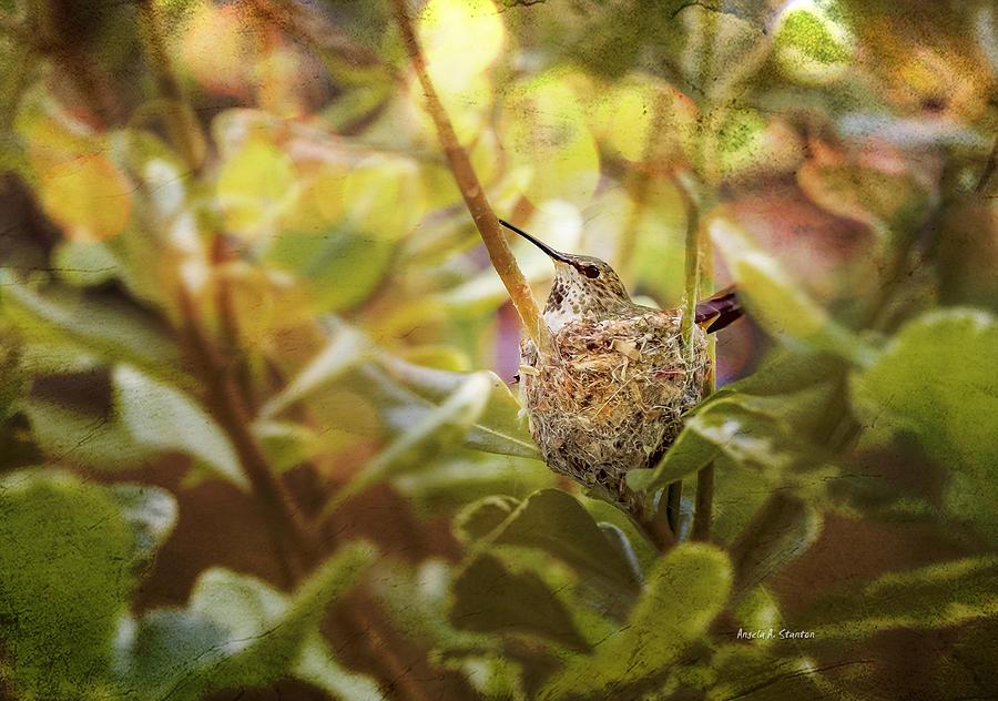Hummingbird Nest Photograph - Hummingbird Mom In Nest by Angela A Stanton