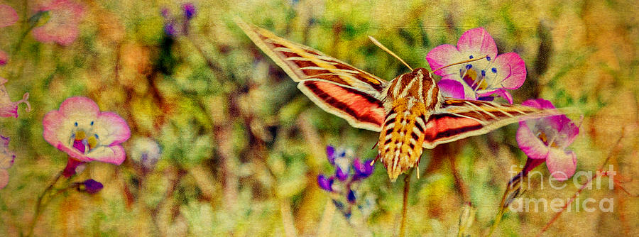 Textures Photograph - Hummingbird Moth In Wildflowers by Pam Vick