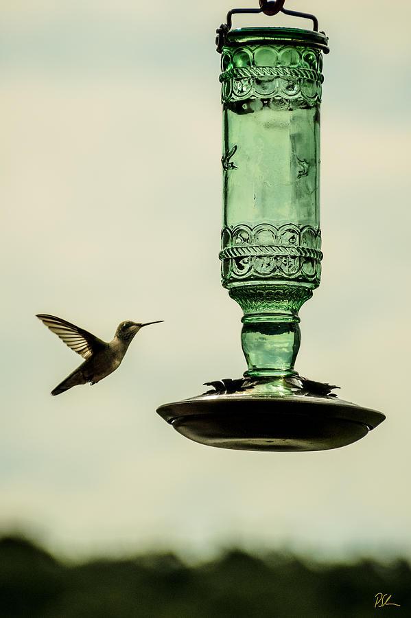 Hummingbird Photograph - Hummingbird by Pat Scanlon