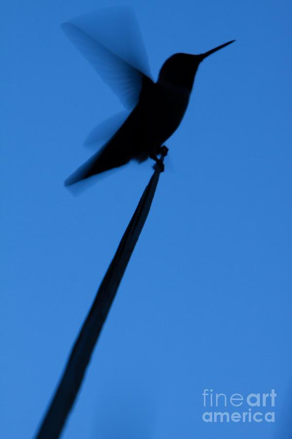 Hummingbird Silhouette by John Wadleigh