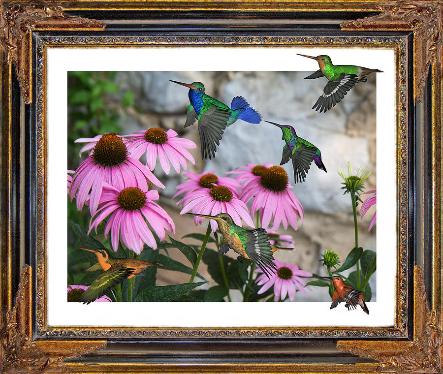 Hummingbirds Digital Art