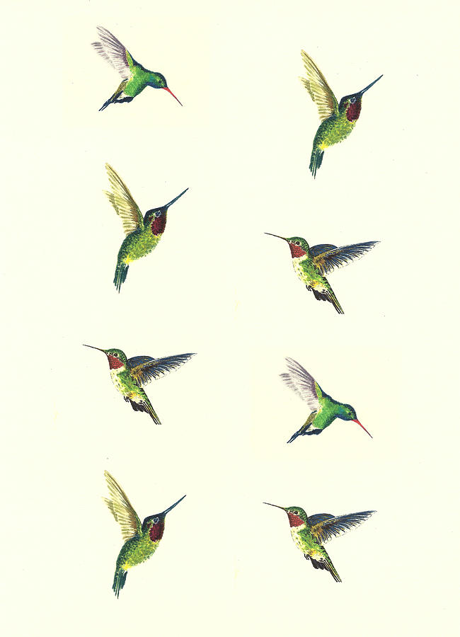 Hummingbirds Painting - Hummingbirds by Michael Vigliotti