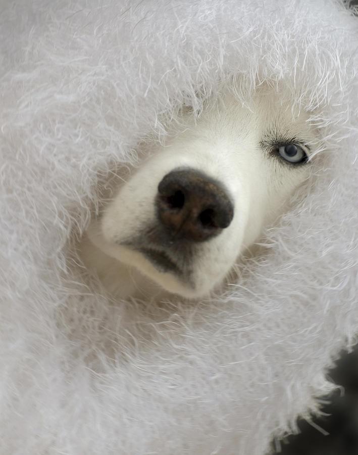 Humorous Photograph - Humorous Pets by Cindy Rubin