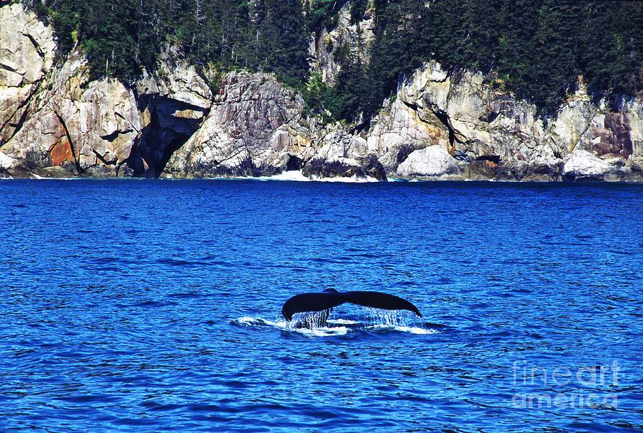 Humpback Whale Photograph - Humpback Whale Alaska by Thomas R Fletcher
