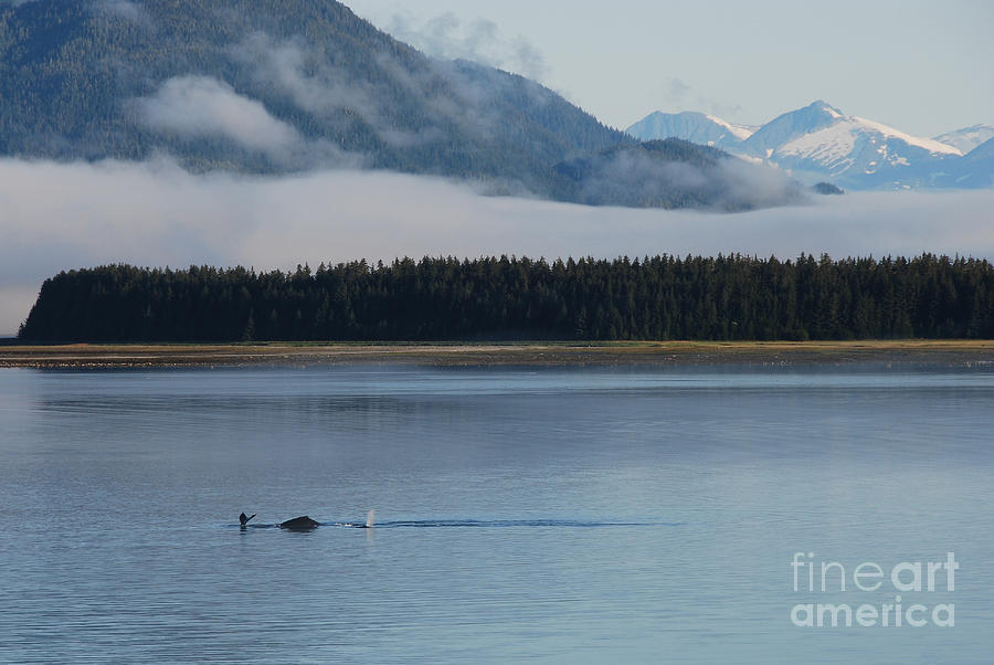 Whales Photograph - Humpback Whales And Alaskan Scenery by Camilla Brattemark